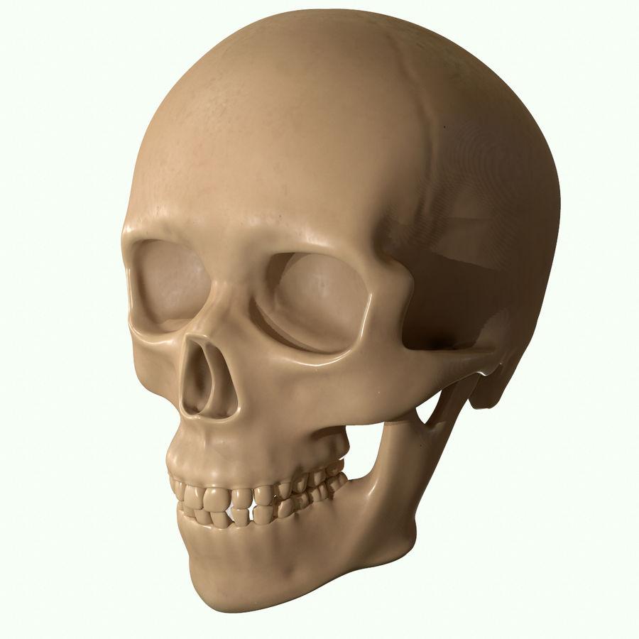 Anatomie musculaire de la tête complète royalty-free 3d model - Preview no. 39