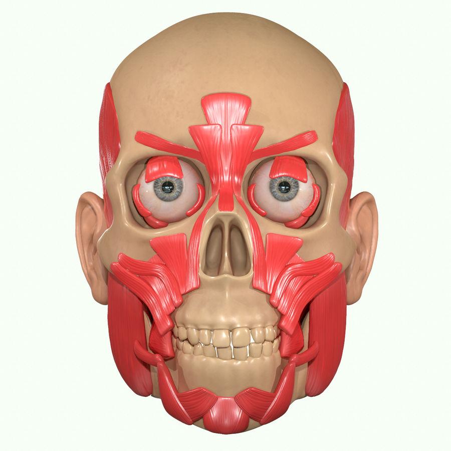 Anatomie musculaire de la tête complète royalty-free 3d model - Preview no. 19