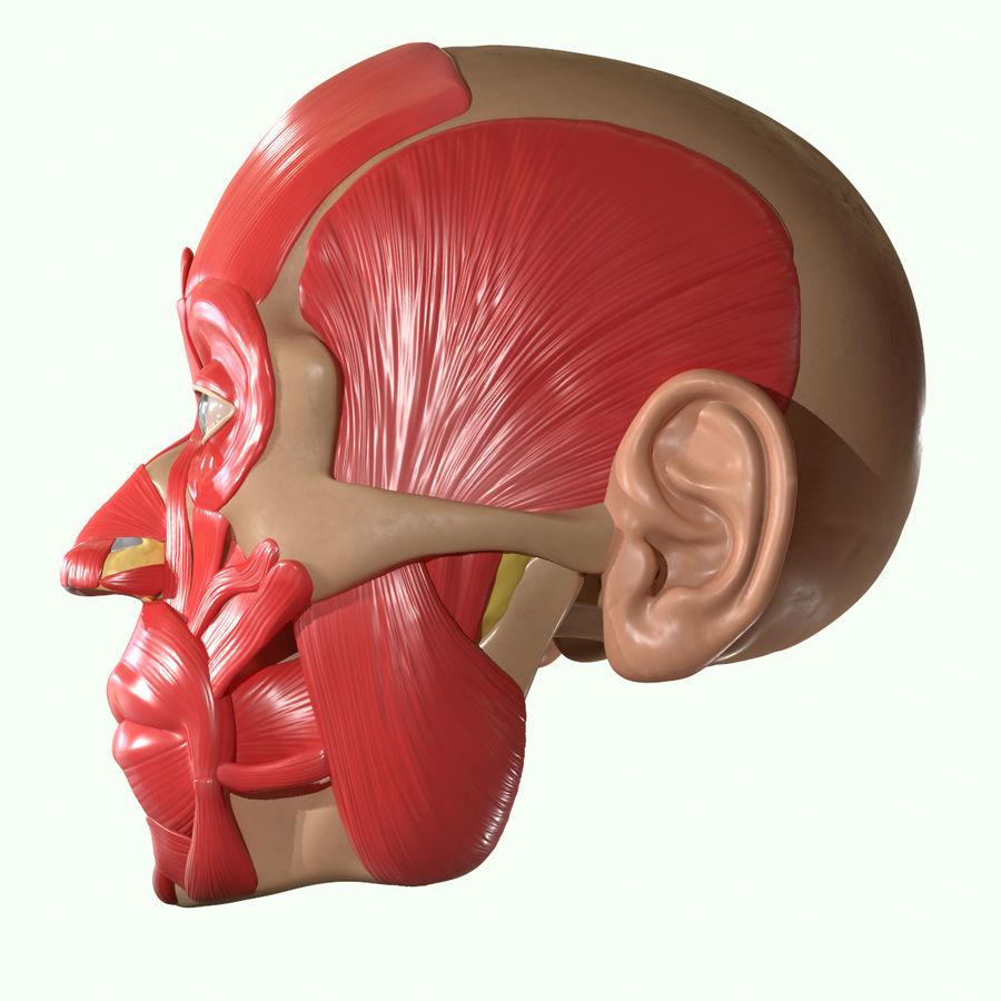 Anatomie musculaire de la tête complète royalty-free 3d model - Preview no. 25