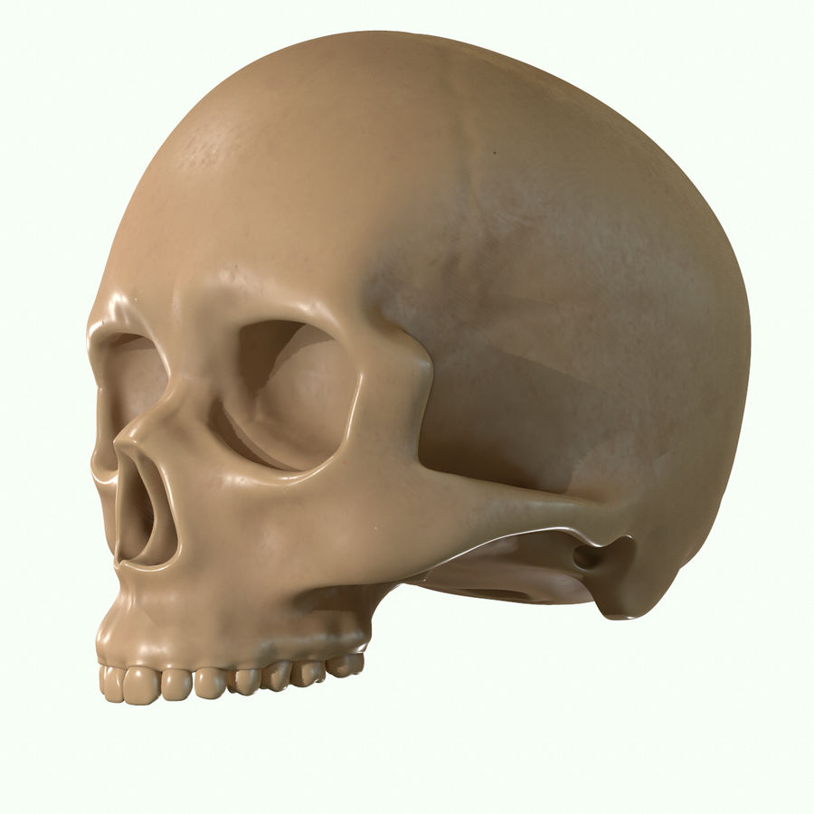 Anatomie musculaire de la tête complète royalty-free 3d model - Preview no. 55