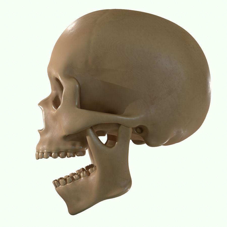 Anatomie musculaire de la tête complète royalty-free 3d model - Preview no. 47
