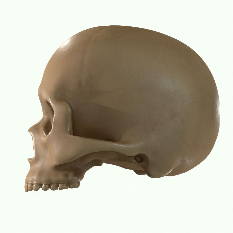 Anatomie musculaire de la tête complète royalty-free 3d model - Preview no. 56