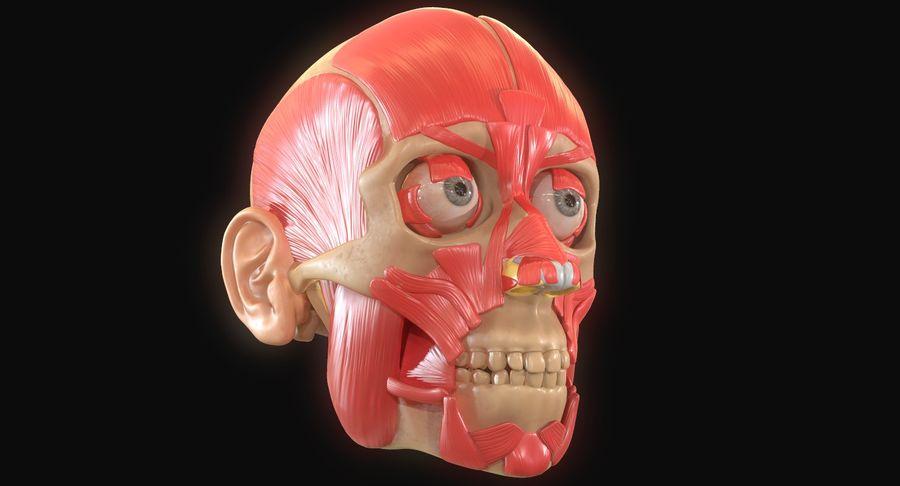 Anatomie musculaire de la tête complète royalty-free 3d model - Preview no. 10