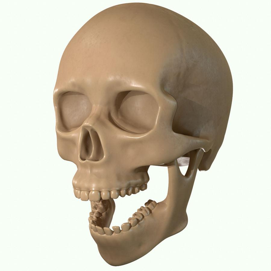 Anatomie musculaire de la tête complète royalty-free 3d model - Preview no. 46