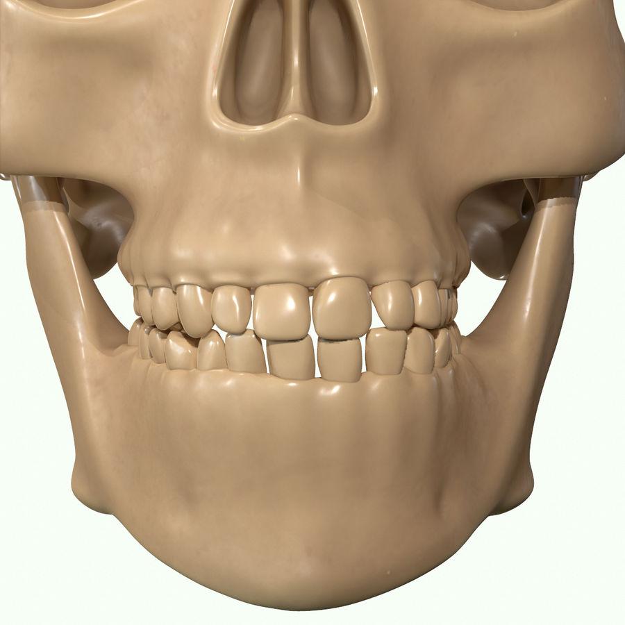Anatomie musculaire de la tête complète royalty-free 3d model - Preview no. 42