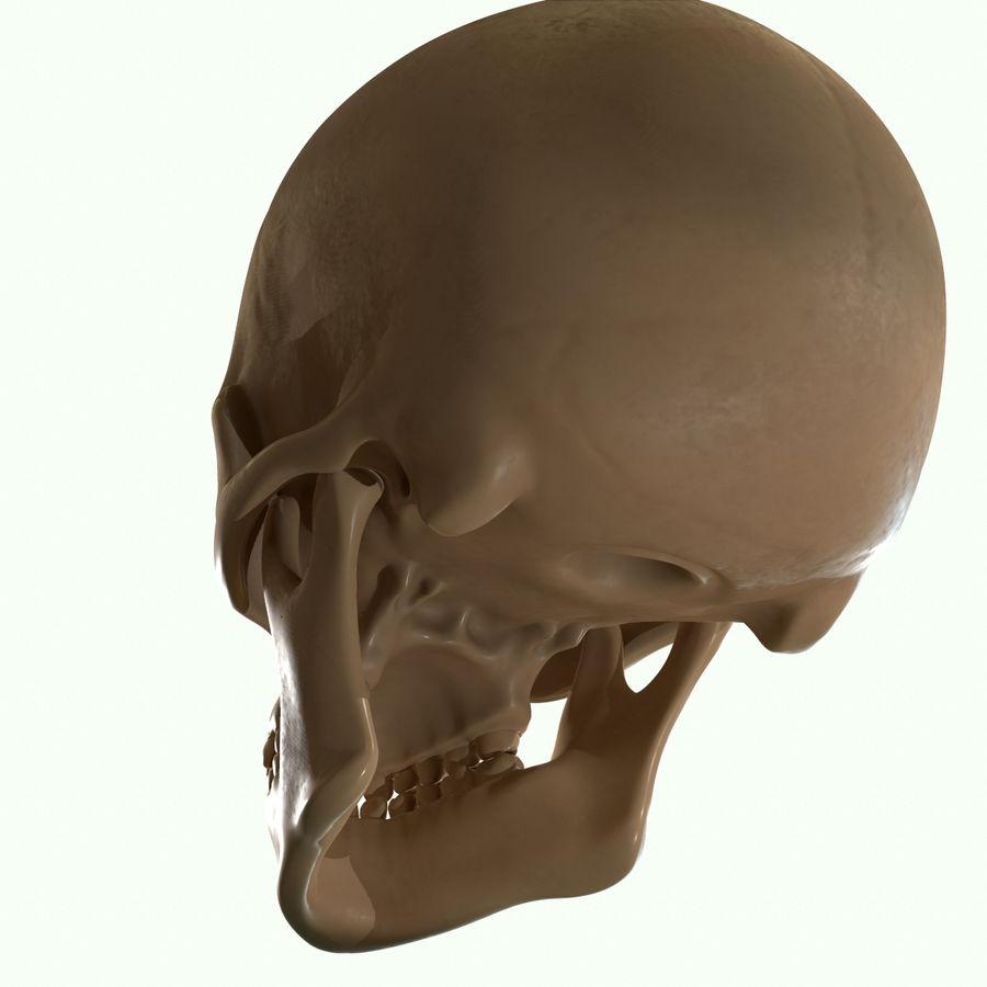 Anatomie musculaire de la tête complète royalty-free 3d model - Preview no. 53