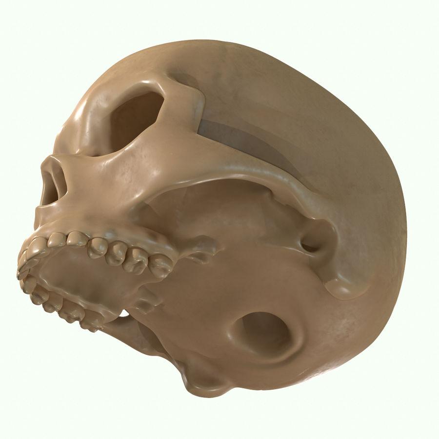 Anatomie musculaire de la tête complète royalty-free 3d model - Preview no. 59