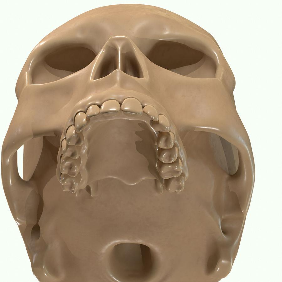 Anatomie musculaire de la tête complète royalty-free 3d model - Preview no. 60
