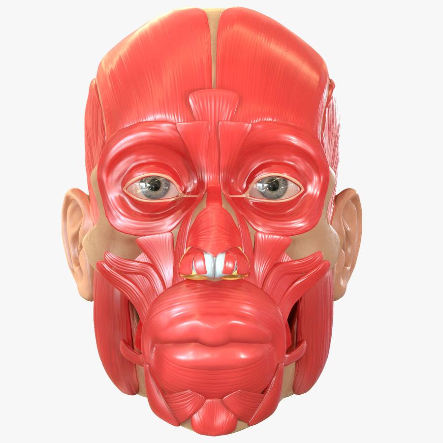 Anatomie musculaire de la tête complète royalty-free 3d model - Preview no. 1