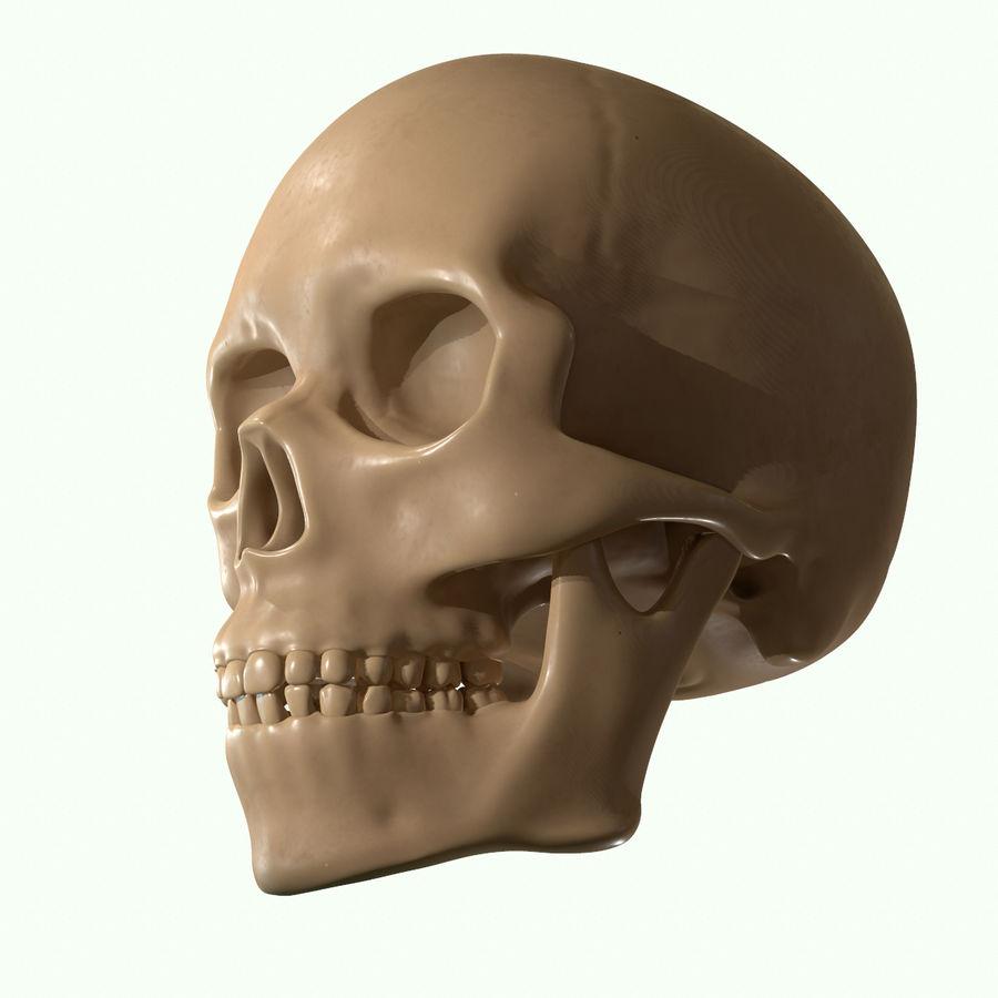 Anatomie musculaire de la tête complète royalty-free 3d model - Preview no. 40