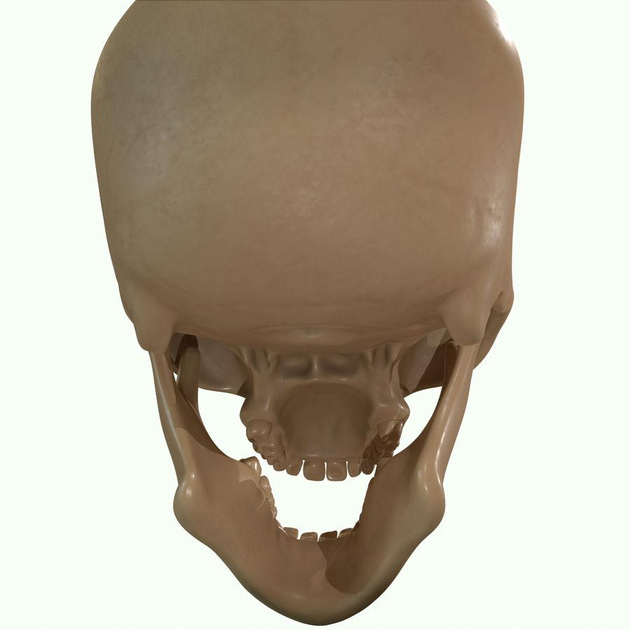 Anatomie musculaire de la tête complète royalty-free 3d model - Preview no. 51