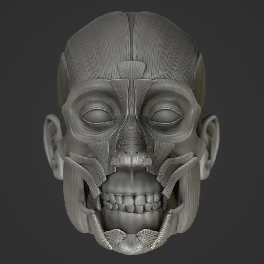 Anatomie musculaire de la tête complète royalty-free 3d model - Preview no. 3