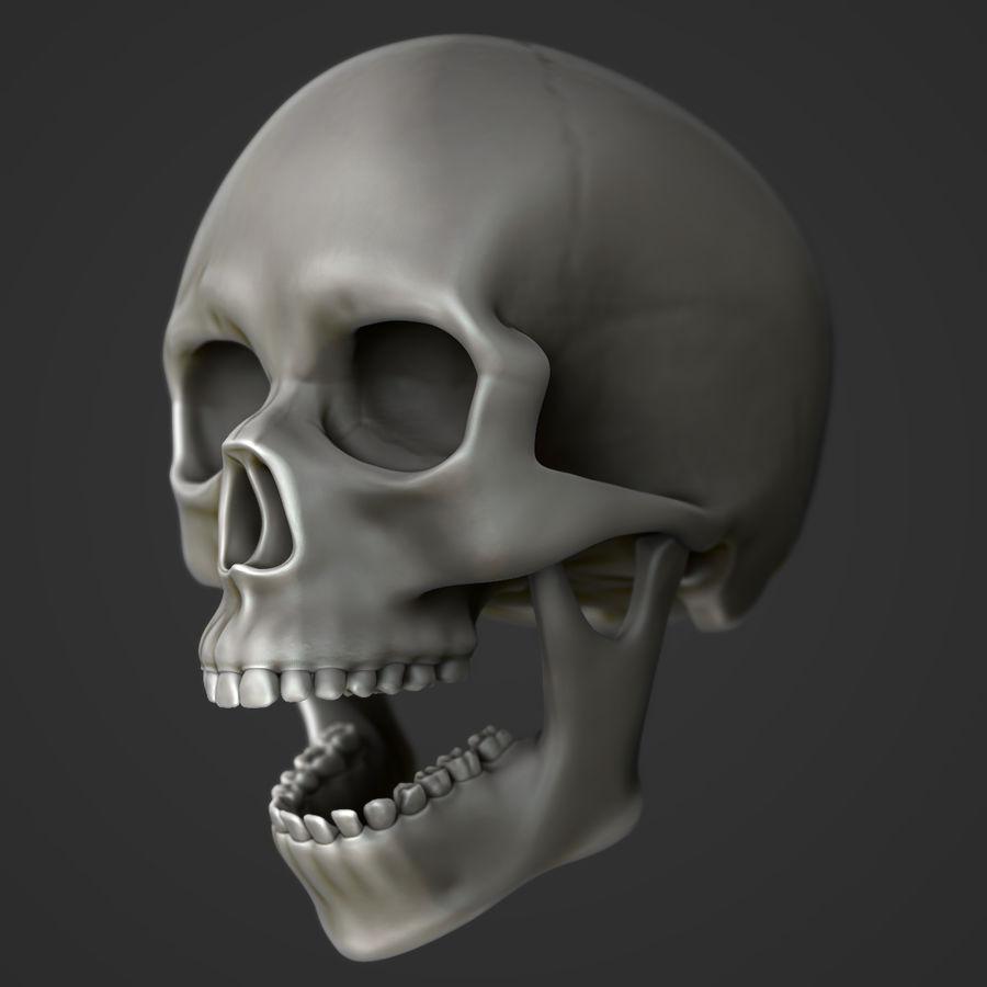 Anatomie musculaire de la tête complète royalty-free 3d model - Preview no. 6