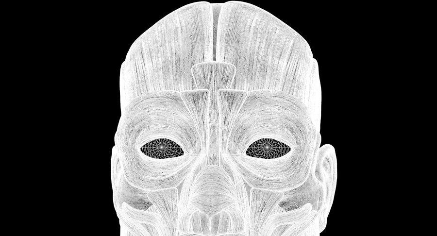 Anatomie musculaire de la tête complète royalty-free 3d model - Preview no. 70