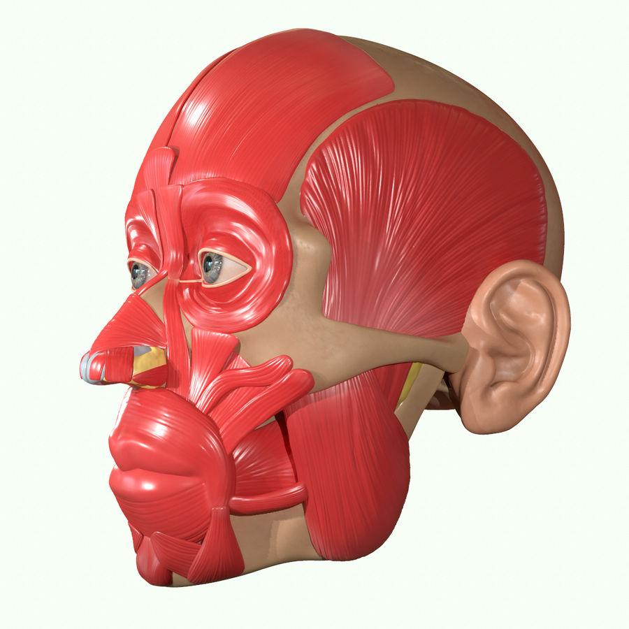 Anatomie musculaire de la tête complète royalty-free 3d model - Preview no. 23