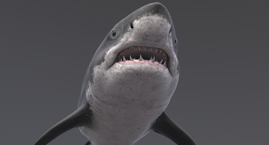 Grande squalo bianco royalty-free 3d model - Preview no. 8