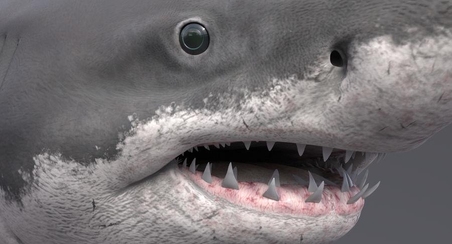 Grande squalo bianco royalty-free 3d model - Preview no. 11