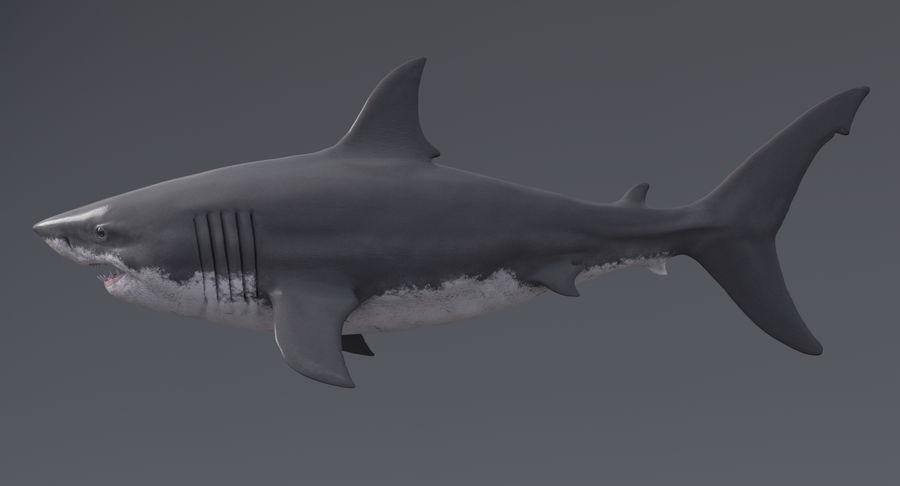 Grande squalo bianco royalty-free 3d model - Preview no. 7
