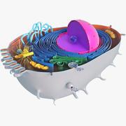 Célula animal 2 modelo 3d