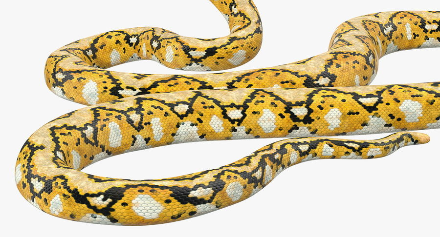 Yellow Python Snake Attack Pose royalty-free 3d model - Preview no. 17