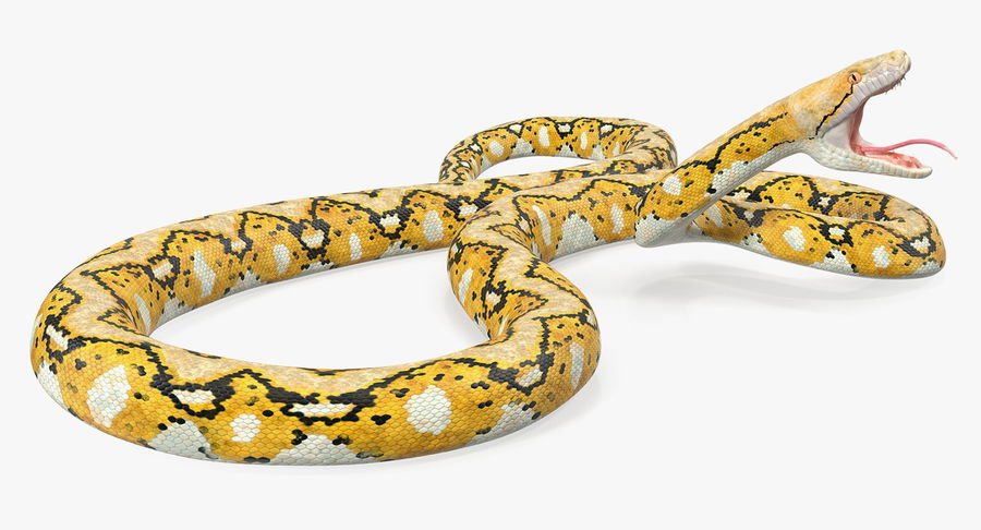 Yellow Python Snake Attack Pose royalty-free 3d model - Preview no. 9