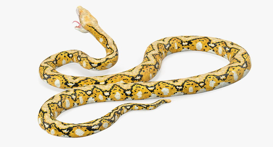 Yellow Python Snake Attack Pose royalty-free 3d model - Preview no. 11