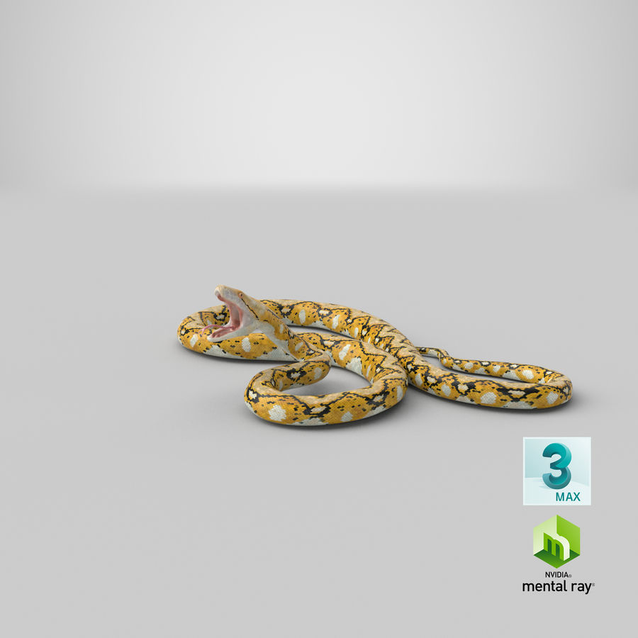 Yellow Python Snake Attack Pose royalty-free 3d model - Preview no. 31