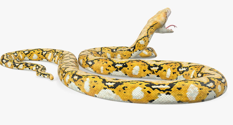 Yellow Python Snake Attack Pose royalty-free 3d model - Preview no. 10