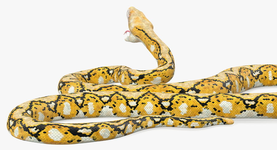 Yellow Python Snake Attack Pose royalty-free 3d model - Preview no. 7