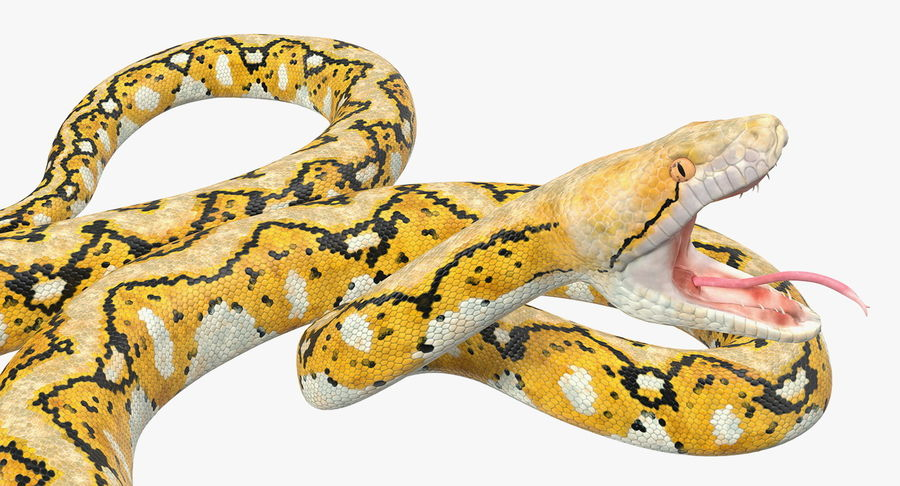 Yellow Python Snake Attack Pose royalty-free 3d model - Preview no. 14