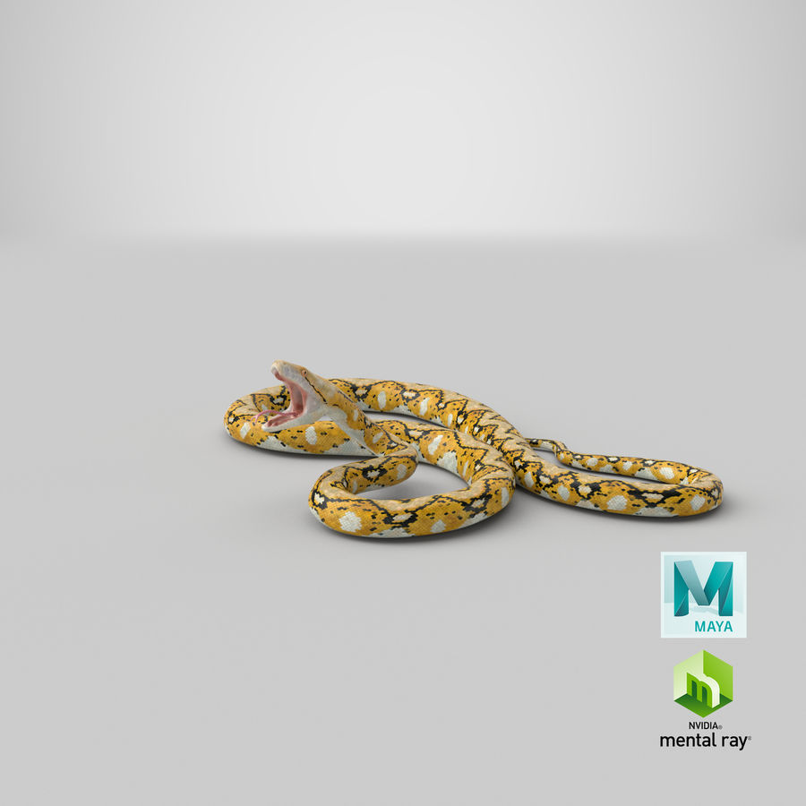 Yellow Python Snake Attack Pose royalty-free 3d model - Preview no. 33
