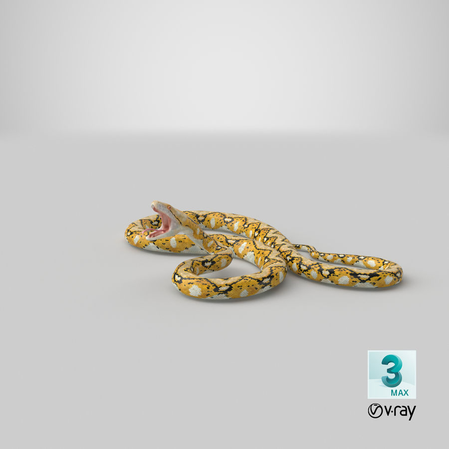 Yellow Python Snake Attack Pose royalty-free 3d model - Preview no. 32