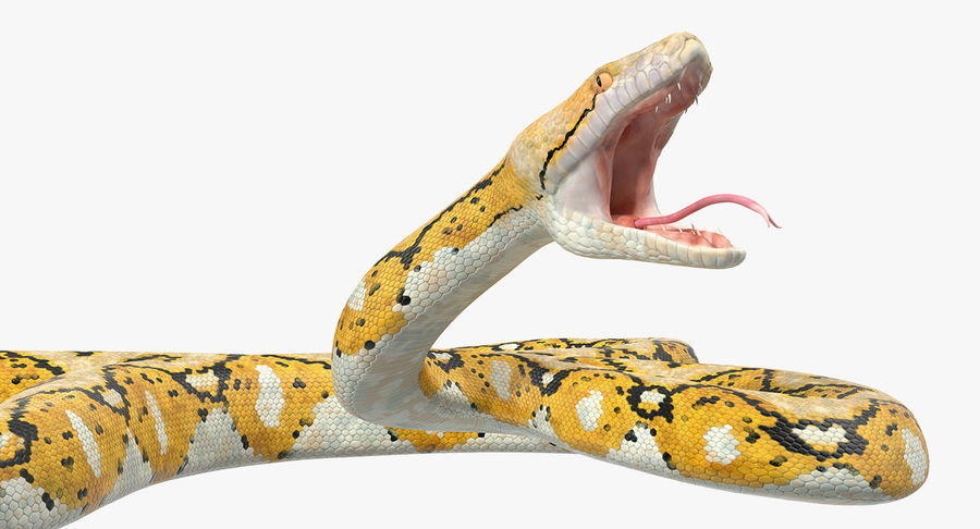 Yellow Python Snake Attack Pose royalty-free 3d model - Preview no. 15