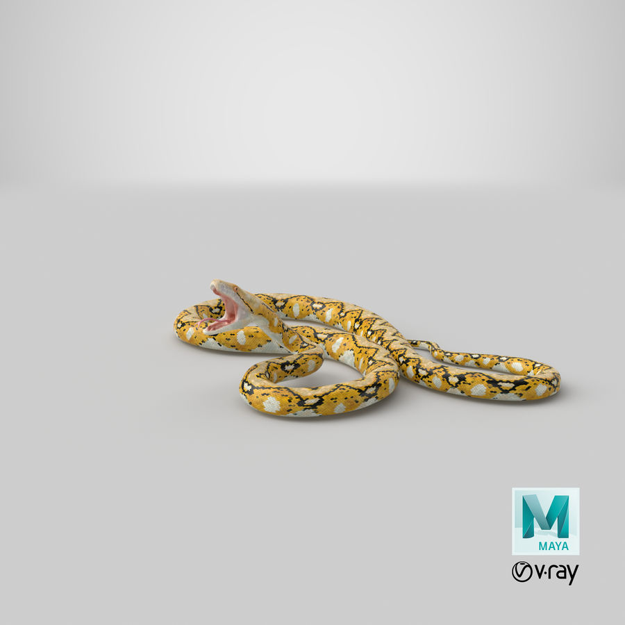 Yellow Python Snake Attack Pose royalty-free 3d model - Preview no. 34