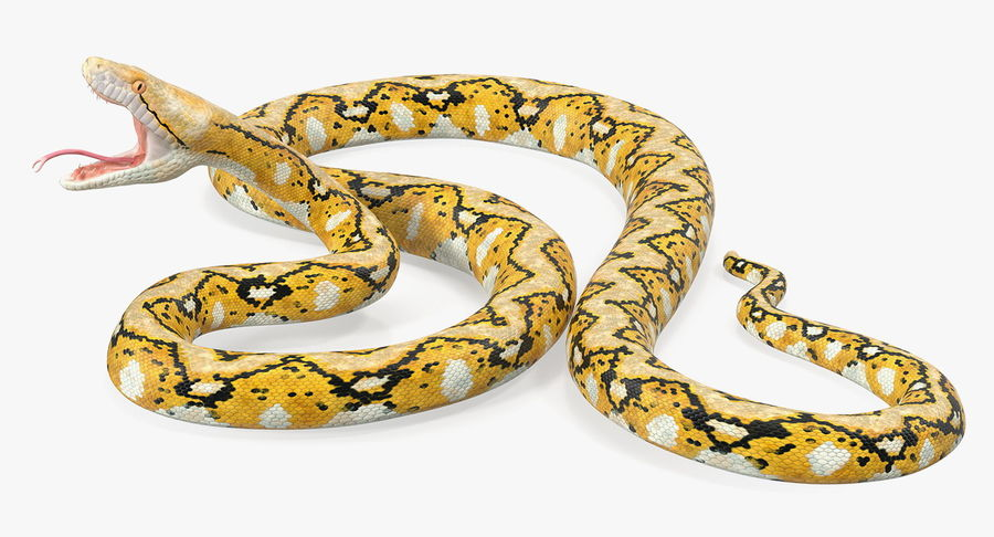 Yellow Python Snake Attack Pose royalty-free 3d model - Preview no. 8
