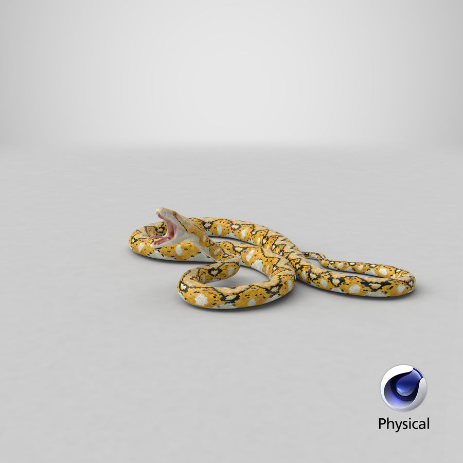 Yellow Python Snake Attack Pose royalty-free 3d model - Preview no. 28