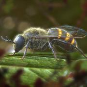 Пчела 3d model