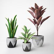 Set di piante 3d model