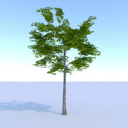 Eiche (Sommer) Low Poly 3d model