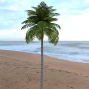 棕榈树(低聚) 3d model