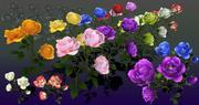Flor rosa bungaria modelo 3d