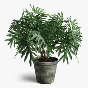 philodendron plant 3d model
