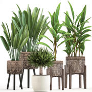 Collection of Exotic Plants 3d model
