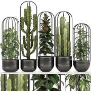 Samling av exotiska växter 3d model