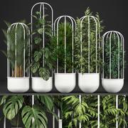 이국적인 식물의 수집 3d model