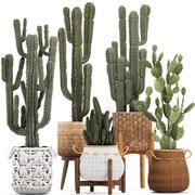 Collection de plantes ornementales et exotiques 3d model