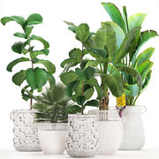 Коллекция декоративных растений Экзотические растения 3d model