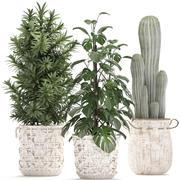 Egzotik bitkilerin toplanması 3d model