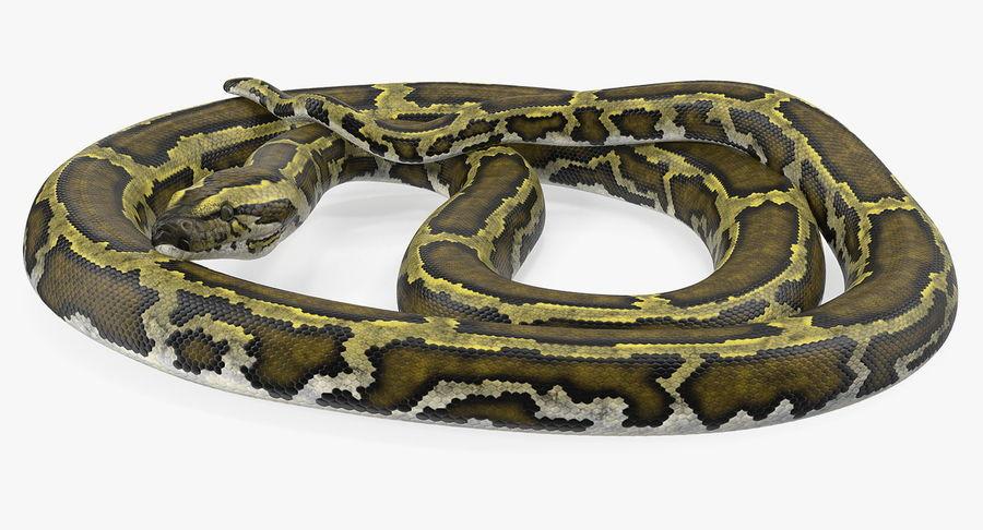 Pose enroulée de serpent vert python royalty-free 3d model - Preview no. 7