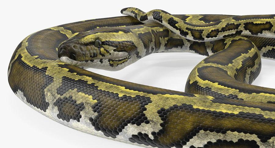 Pose enroulée de serpent vert python royalty-free 3d model - Preview no. 9